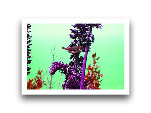 Waxeye Colour Splash