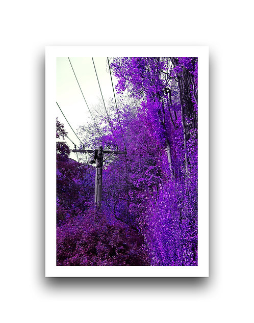 Autumn Vibrancy - Violet
