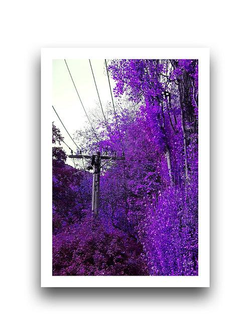 Autumn Vibrancy - Violet