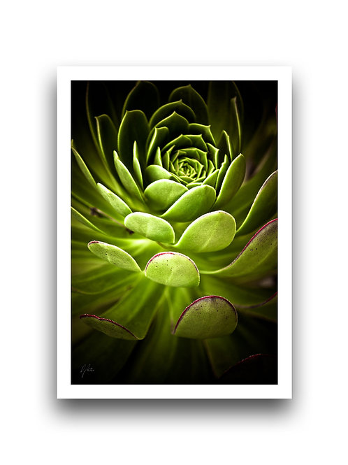 Striking Succulent
