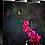 Thumbnail: Japonica Series I
