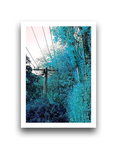 Autumn Vibrancy - Sky Blue