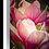 Thumbnail: Saucer Magnolia - Portrait