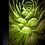 Thumbnail: Striking Succulent