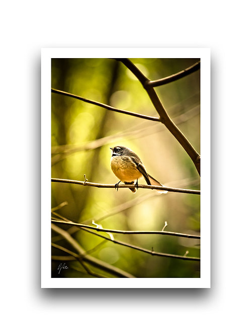 Fantail In The Woods I