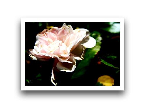 Flora Series VII - Colour