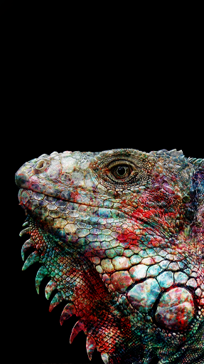 lizard free wallpaper.png