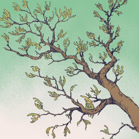 Branches - color test - Courtney Moore