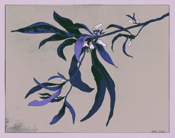 spiderplant copy blue.jpg