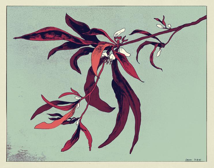 spiderplant copy.jpg