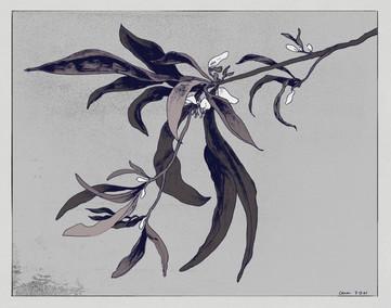 spiderplant copy mono.jpg