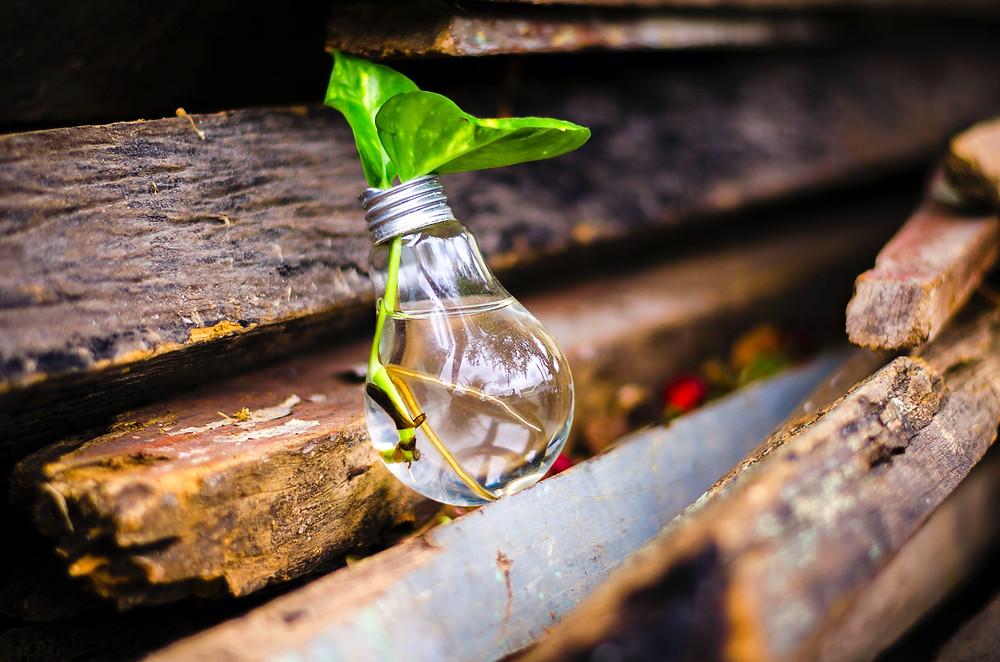 Sustainability, Sustainable Development, SDGs, Innovation, Economy, The SustainabilityX® Magazine