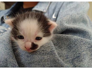 可愛い猫ちゃんに癒されてました