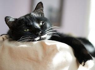 cat-3430571__340.jpg