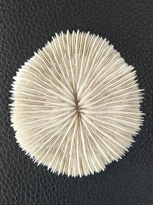 MUSHROOM CORAL - vintage decorative fossil