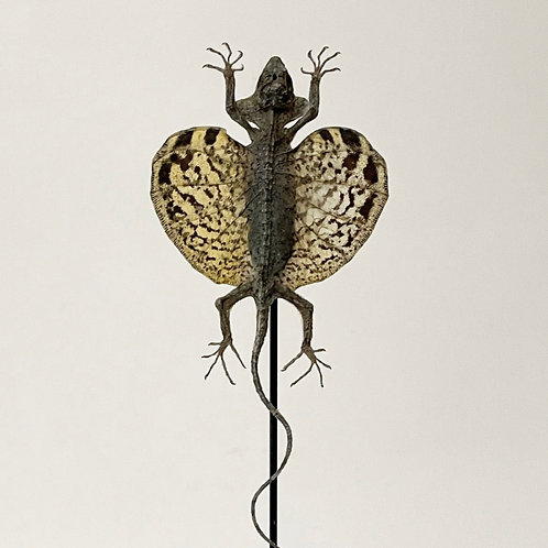 FLYING LIZARD - vintage taxidermy