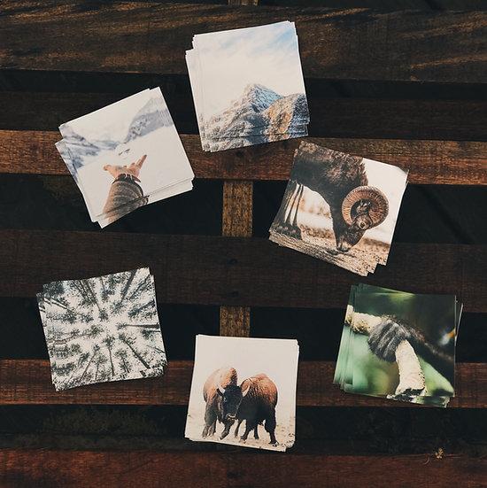 Jeromy Laux Nature Pack