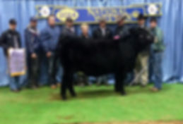 Watson Family Show Cattle | Cattle Sales | Ohio | Show Cattle for Sale