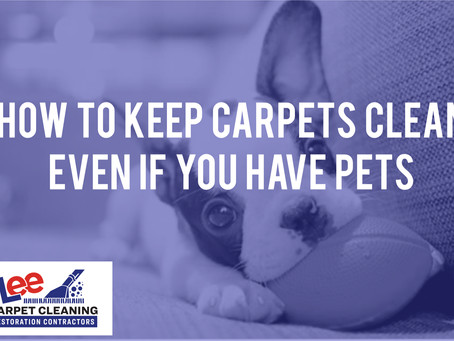 How To Keep Carpets Clean Even if You Have Pets.
