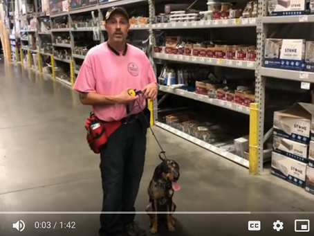 Wilson the Coon Hound Obeys Trainer Commands in Distracted Environment at Lowe's Las Vegas