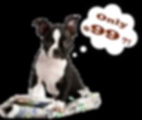 boxer-pup-newspaper-99-200x169.png