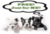 three-french-bulldog-pups-free-for-me-20