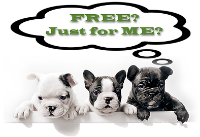 three-french-bulldog-pups-free-for-me-20