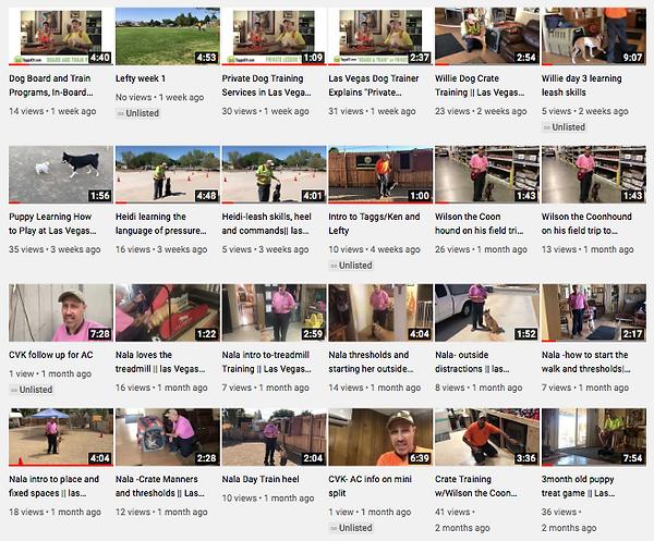 Many Dog Training Videos On Taggs K9 Dog