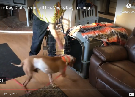 Dog Crate Training Progress with Willie the Rescue Dog