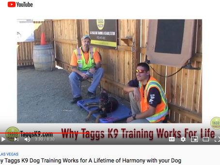 Why Taggs K9 Professional Dog Training Works for a Lifetime of Harmony with your Dog