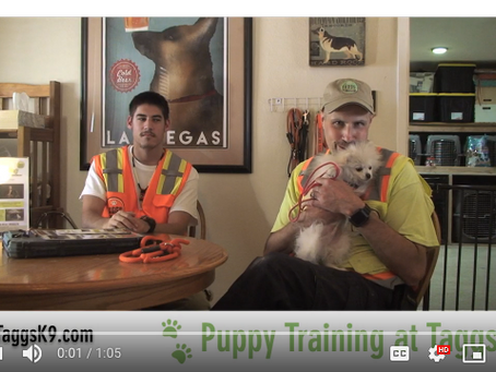 10 Day Puppy Training Teaches Puppies Foundational Good Behavior