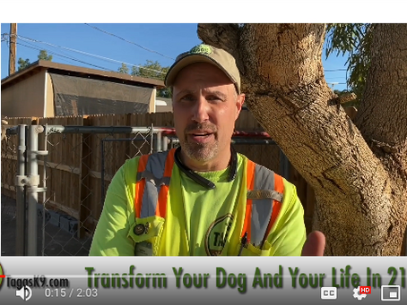 Board-In Dog Training - Transform Your Dog and Your Life in 21 days with Board and Train Program