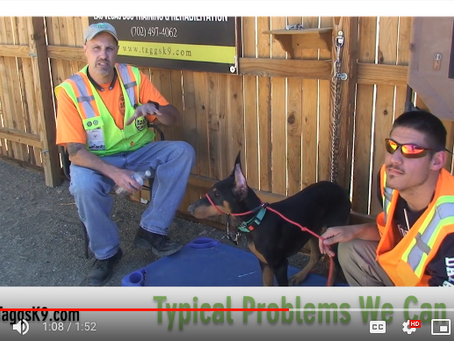 Dog Obedience and Behavior Problems That Can Be Fixed at Taggs K9 Dog Training Ranch