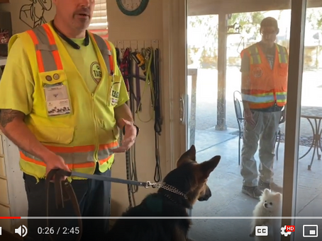 Dog Trainer and Dodger the German Shepherd Puppy Show How to De-escalate Dog Tension Situations