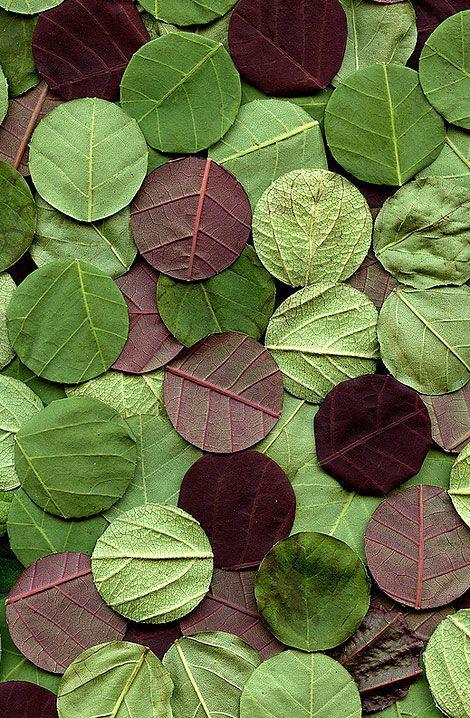 confettis en feuilles d'arbre perforées pour un lancer biodégradable