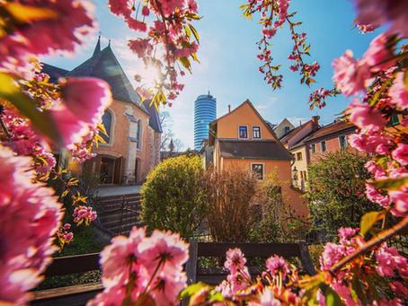 Die Kirschblüte in Jena