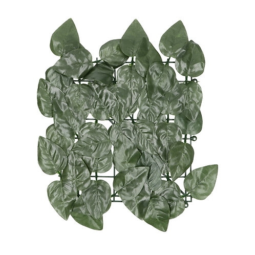 Cerco Eucaliptus