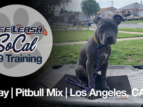 Friday | Pitbull Mix | Los Angeles, CA