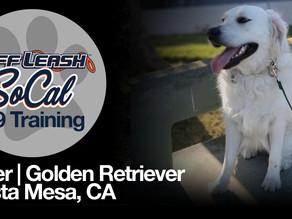 Piper | Golden Retriever | Costa Mesa, CA