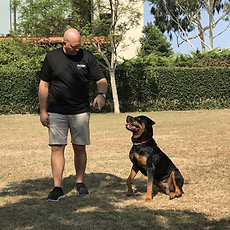 OffLeash SoCal Dog Obedience Training - Rottweiler Extended Sit