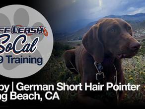 Bixby | German Short Hair Pointer | Long Beach, CA