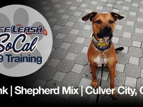 Hank | Shepherd Mix | Culver City, CA