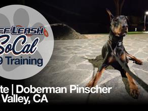 Dante   Doberman Pinscher   Sun Valley, CA
