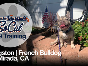 Kingston | French Bulldog | La Mirada, CA