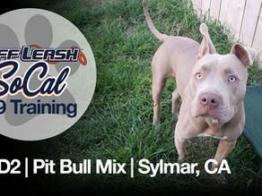 R2-D2 | Pit Bull Mix | Sylmar, CA
