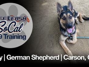 Roxy | German Shepherd | Carson, CA
