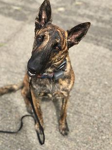 OffLeash SoCal Dog Trainer -German Shepard