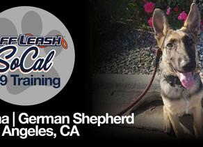 Kona   German Shepherd   Los Angeles, CA
