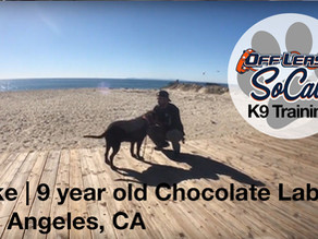 Duke | 9 years old | Chocolate Lab | Los Angeles, CA