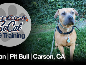 Conan | Two Year Old | Pit Bull | Carson, CA